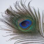 공작깃털 고양이 장난감 70cm