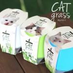 고양이가 좋아하는 풀 캣그라스-원형화분